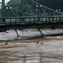 Tree branches left in the bridge after the river started to recede