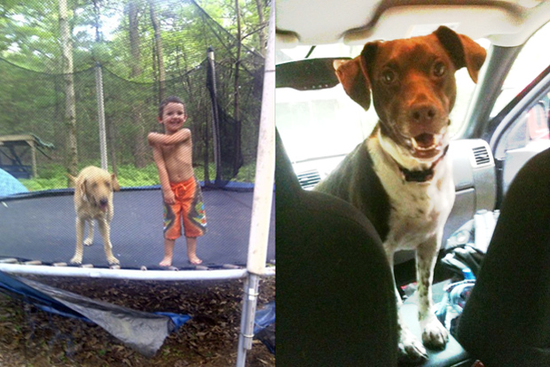 Dogs having fun outside on the trampoline and driving around in cars in the Lehigh Valley.