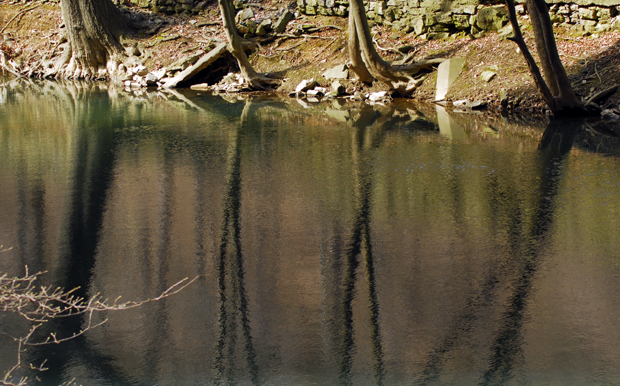 Reflection of Trees on the Bushkill Creek