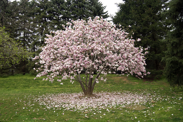 187 Flowering Trees Photos