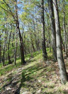 Lehigh Gap Nature Center, places to walk and hike near the Lehigh Valley
