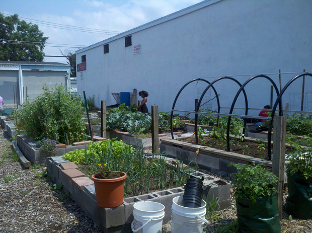 10th & Pine Streets Community Garden, Easton, PA